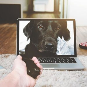 Online Dog-Training Privates