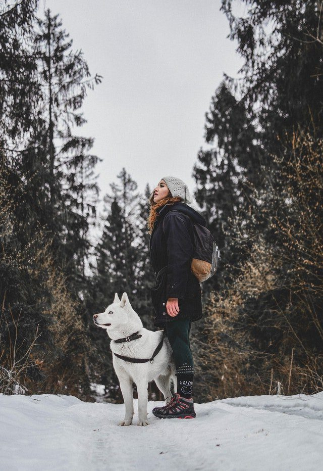 Intro to dog training